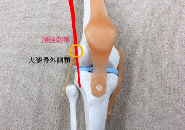 膝模型正面