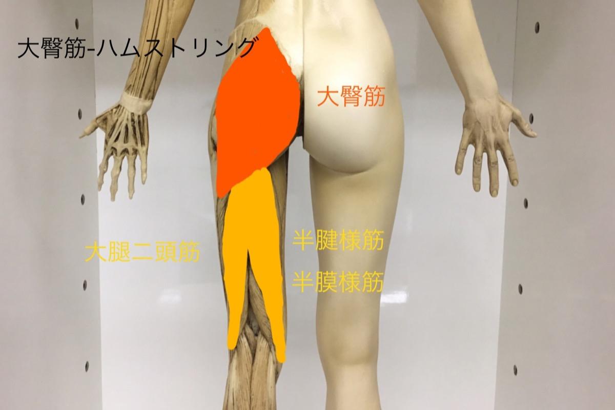 大臀筋とハムストリング